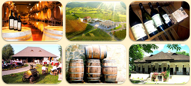 One day Wine tasting tour from Bucharest